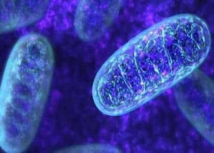 Luz mitocondrial ¡Liberate del karma de familia! Para iniciados avanzados